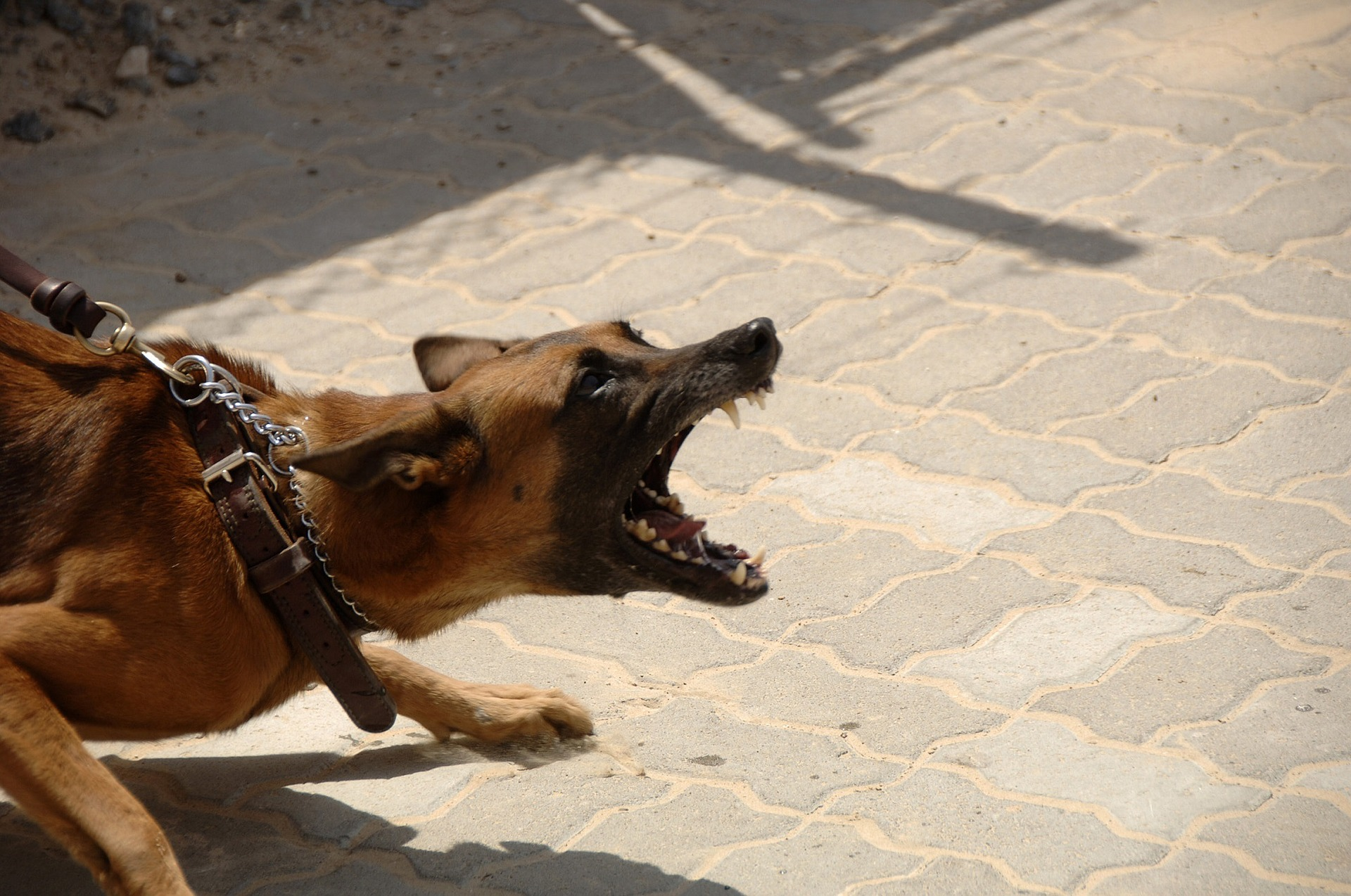 Brent Eames secures $260,000.00 Settlement in Dog Injury Case